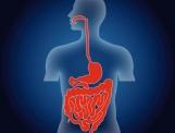 L'infection de l'intestin à la CANDIDA