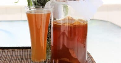 Kombucha Traditionnel